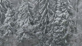 Winter Forest in Germany stock video