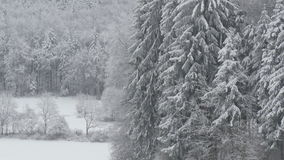 Winter Forest in Germany stock video footage