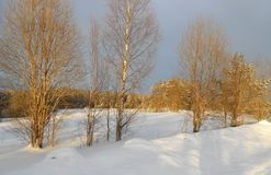 Winter forest glade with birch forest. stock images