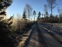 Winter forest gravel road Stock Photography