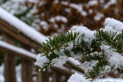 In the winter forest. Green needles in the snow.  royalty free stock images
