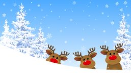 Reindeer in the winter forest stock photos