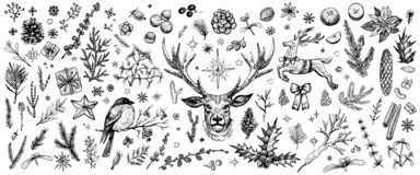 Free Winter Forest Hand Drawn Vector. Vintage Christmas Plants. Sketched Woodland Evergreens Clipart. Stock Images - 191046244