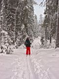 Winter forest. Happy woman. Skier Stock Images