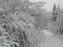Winter forest with heavy snow Stock Image