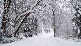 Winter forest during a heavy snowfall. Winter forest with a road during a heavy snowfall stock footage