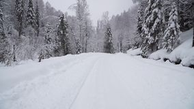 Winter Forest during a Heavy Snowfall. Winter Forest with a Road during a Heavy Snowfall stock video footage
