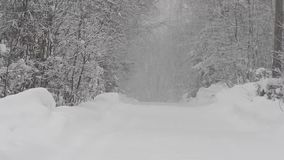 Winter forest during a heavy snowstorm and snow stock footage