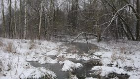 Winter forest during a heavy snowstorm and snow stock video footage