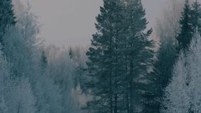 Winter forest in a hoarfrost. stock footage