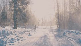 Winter forest in a hoarfrost. Snowfall. stock footage