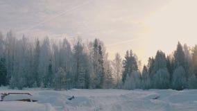 Winter forest in a hoarfrost. Wide shot 4K stock footage