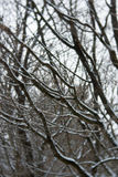 Winter forest. In Hungary Stock Photography