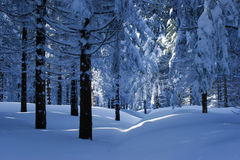 Winter Forest III Royalty Free Stock Photos
