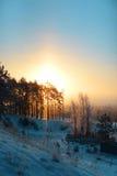 Winter forest, illuminated by sunrise Stock Photography