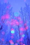 Winter forest and illumination Royalty Free Stock Image