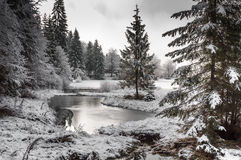 Winter Forest In Carpathians Royalty Free Stock Photos