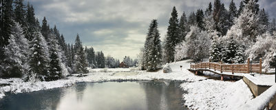 Winter Forest In Carpathians Stock Photo