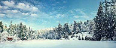 Free Winter Forest In The Carpathians Royalty Free Stock Images - 100828499