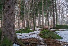 Winter forest in Karkonosze Royalty Free Stock Image