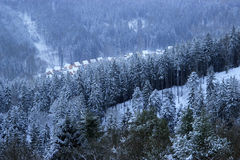 Winter forest. In Karlovy Vary Stock Photos