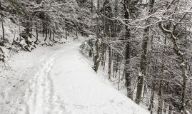 WInter in forest Stock Image