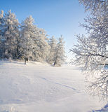 Winter forest and lake Stock Images