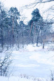 Winter forest lake Royalty Free Stock Image