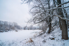 Winter forest and lake Stock Image