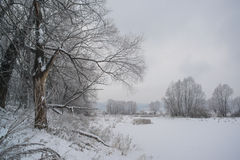 Winter forest and lake Royalty Free Stock Photography