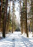 Winter Forest Landscape. Tree lined snowy forest path in Winter Stock Photography