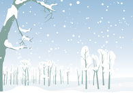 Winter forest landscape Stock Photo