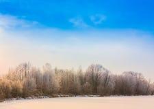 Winter Forest Landscape Stockfoto
