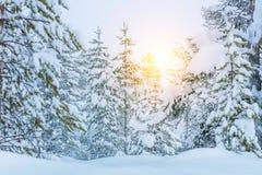 Winter Forest Landscape - Bäume bedeckten großen Schnee Lizenzfreies Stockfoto