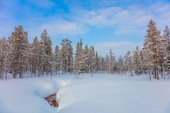 Winter forest landscape, big size Royalty Free Stock Image