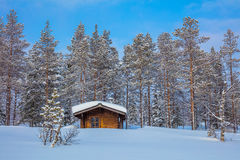 Winter forest Landscape after blizzard Stock Photo