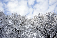 Winter forest landscape Royalty Free Stock Photos