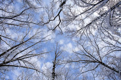 Winter forest landscape with blue sky and clouds Stock Photos