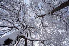 Winter forest landscape Stock Image