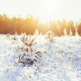 Winter Forest Landscape Stock Images