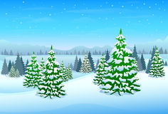 Winter forest landscape christmas background Stock Photos