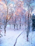 Winter forest landscape in cold sunny morning Royalty Free Stock Images