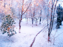 Winter forest landscape in cold sunny morning Royalty Free Stock Image