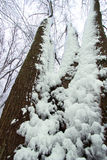 Winter Forest Landscape Illinois Stock Images
