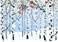Winter Forest -. Winter Forest Landscape is a  illustration Royalty Free Stock Image
