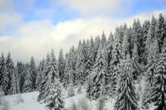 Winter forest landscape Stock Photos