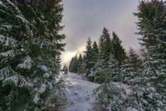Winter forest. Winter landscape, Piricske, Miercurea Ciuc / Csikszereda, Harghita County, Romania Royalty Free Stock Photos