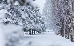 Winter forest landscape with snow royalty free stock photo