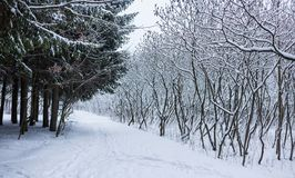 Winter forest landscape with snow stock images