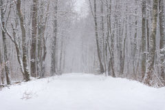 Winter Forest Landscape. Snow-Covered Road In The Forest During The Snowfall.  Winter Story With Snow-Covered Forest And Road Amon Stock Images